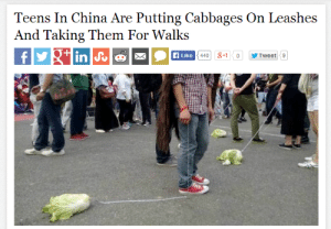 China, Tweet, and Them: Teens In China Are Putting Cabbages On Leashes  And Taking Them For Walks  Like  Tweet 9