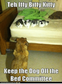 itty bitty: Teh Itty Bitty Kitty  Keep the Dog Off the  Bed committee  ICANHASCHEEZEURGER.COM