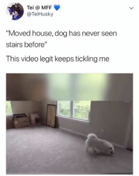 "Wait for it 😂😂😂🐶: Tei @ MFF  @TeiHusky  ""Moved house, dog has never seen  stairs before""  This video legit keeps tickling me Wait for it 😂😂😂🐶"