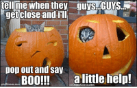 "Boo, Facebook, and Memes: tell me when they guTS CUYS.N  get close and ill  pop out and say  BOO!!!  a little help!  www.facebook.com/cat cataddictsanony-mouse Last day to enter the C.A.A. CAT-O-LANTERN CONTEST - Best 3 gest prizes from both from🍷 PetWinery🍷AND also from the ever catastic 🎁 meowbox 🎁~ PLEASE GO GIVE EACH PAGE A ""LIKE"" BEFORE ENTERING!  Please remember to include #CAAhalloweencontest. SHIPS WORLDWIDE! Extending contest until Nov. 1st PST   FULL DETAILS: https://goo.gl/ :-)"