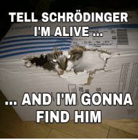 """<p>Tell schrödinger I&rsquo;m alive&hellip; And I&rsquo;m gonna find him via /r/memes <a href=""""http://ift.tt/2B7vM4O"""">http://ift.tt/2B7vM4O</a></p>: TELL SCHRODINGER  versatite Paper Good for Most Jobs  DOCK  I'M ALIVE  レ7tality  sTOP BLK  053208015  M LT  URP-4200 PAPER LTR  cntO PK  15  82047  FIND HIM <p>Tell schrödinger I&rsquo;m alive&hellip; And I&rsquo;m gonna find him via /r/memes <a href=""""http://ift.tt/2B7vM4O"""">http://ift.tt/2B7vM4O</a></p>"""