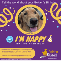 """Is your Golden's Birthday coming up? If it is, we at Golden Rescue would love to have a recent photo of your special family member. Please send photos to socialmedia@goldenrescue.ca   Please use """"Birthday Photo"""" as your subject line and be sure to include your dogs' name and rescue number in your email. Please send your photo to us at least one month in advance of your Golden's birthday. Thank you!  #goldenretriever #rescuedog #adoptdontshop #birthday: Tell the world about your Golden's Birthday!  Oliver #2127  'H HAPPY  THAT IT'S MY BIRTHDAY!  Golden Rescue needs your updated pictures  to celebrate your Golden's Special Day!  Send to: socialmedia@goldenrescue.ca  *Please include name, rescue number and DOB*  Golden  Rescue  About Second Chances  goldenrescue.ca Is your Golden's Birthday coming up? If it is, we at Golden Rescue would love to have a recent photo of your special family member. Please send photos to socialmedia@goldenrescue.ca   Please use """"Birthday Photo"""" as your subject line and be sure to include your dogs' name and rescue number in your email. Please send your photo to us at least one month in advance of your Golden's birthday. Thank you!  #goldenretriever #rescuedog #adoptdontshop #birthday"""