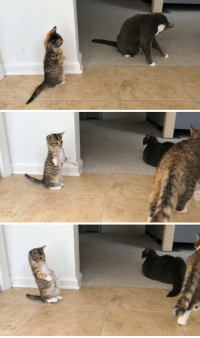 Target, Tumblr, and Annie: temblequedecoco:  Annie is almost 7 weeks old and is just now realizing she isn't the only kitty in the house!
