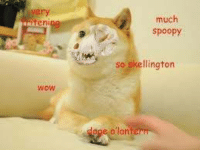 ~Mrs.Doge: ten  WoW  much  Spoopy  so skellington ~Mrs.Doge