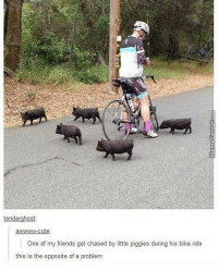 Bike Riding, Cute, and Friends: tenderghost:  awwwwww-cute  One of my friends got chased by little piggies during his bike ride  this is the opposite of a problem You came to the wrong neighborhood...