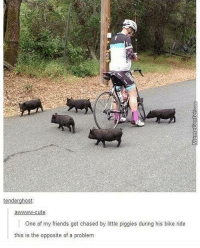 Bike Riding, Memes, and Bike: tenderghost:  awwwwww-cute  One of my friends got chased by little piggies during his bike ride  this is the opposite of a problem #CFPics #funny