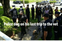 Police, Dog, and Trip: teria  Police dog on his last trip to the vet <p>Hand salute</p>