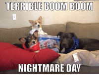 So it begins...: TERRIBLE BOOM BOOM  CAN  NIGHTMARE DAY So it begins...