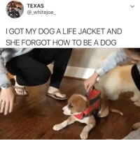 Life, Memes, and Twitter: TEXAS  @ whitejoe_  I GOT MY DOG A LIFE JACKET AND  SHE FORGOT HOW TO BE A DOG This is snow booties on crack. Twitter: _whitejoe_