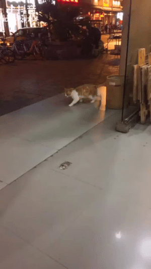 Be Like, Funny, and The Matrix: texeoghea: fly-sky-high-09:  dazzmazing-dazz:  the-armed-utahn:  saltrat88:  Forgot how to cat?  Glitch in the matrix  Lagging in online games be like.   EHAT SURPRISES ME IS THAT CAT CAN ACTUALLY MOVE AWAY ANY TIME IT WANTS CUZ YOU CAN SEE IT NORMALLY STEP UP TO A PERSON BUT THEN JUST GOES BACK TO DOING A FUNNY WALK, SO I THINK IT'S HAVING FUN!  loading screen
