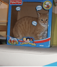 "Tumblr, Blog, and Fisher Price: textures o  Fisher Price  Moo!  "" Toque  oink  Neigh!  ttlePeo  1-5 cursedcatpictures:  submitted by: nigball"