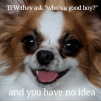 "Tfw, Good, and Boy: TFW they ask ""who's a good boy?""  and you have no idea <p>Good boye</p>"