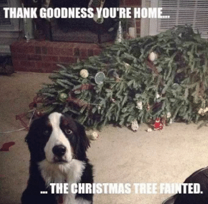 When your family members only expect you to visit them only when invited and you suddenly appear from nowhere.: THANK GOODNESS YOU'RE HOME  THE CHRISTMAS TREE FAINTED. When your family members only expect you to visit them only when invited and you suddenly appear from nowhere.