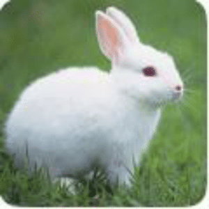 Thank you brave warrior for searching through new here is a picture of my rabbit.: Thank you brave warrior for searching through new here is a picture of my rabbit.