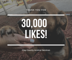 Animals, Family, and Memes: THANK YOU FOR  30,000  LIKES!  Clay County Animal Service:s Thank you for helping us reach 30,000 likes! That's 30,000 people helping us save lives by liking, commenting, and sharing our posts to help animals be reunited with families, go into foster care, or find their new forever family! #ClayCoFL #ClayCoAnimals