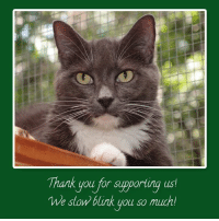 """Animals, Cats, and Cute: Thank you for supporting ust  We slow blink you so muchl Darby 2 is so happy to announce some more donations for our July 29th, """"An Evening with Jackson Galaxy""""! You'll find these items in the Silent Auction or as part of our guests swag bags! Thank you to all the friends who care about animals and support Shadow Cats!   Fleet Feet Sports RoundRock: 2 entries into their training programs for runners! Whether you are training for a marathon or just looking to get in shape they've got a program for you! Check them out at www.fleetfeetroundrock.com or on Facebook  Esther's Follies: They have given us a couple of tickets to see Texas' Premier Magic & Comedy Troupe! Some of the best fun to be had in Austin! Check them out at www.esthersfollies.com or on Facebook   Leighelena: Wide Purple Leather Jigsaw Buckle Bracelet and Double Necklace Leather T-Bar Bracelet! Super cute! Check them out at www.leighelena.com or on Facebook  Pioneer Pet Products: 2 jugs of Smart Cat Clay Litter! Check them out at www.pioneerpet.com or on Facebook"""