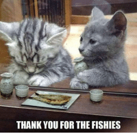 fishi: THANK YOU FOR THE FISHIES