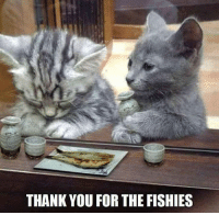 I like the way you think CAT Planet: THANK YOU FOR THE FISHIES I like the way you think CAT Planet