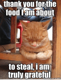 Memes, Addicted, and Mouse: thank you  forthe  food lam about  to steal, i am  truly grateful Wouldn't have to steal, I am a pushover that gives them whatever they want. Happy Thanksgiving from C.A.A. - Cat Addicts Anony-mouse