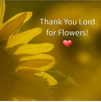 thank you lord: Thank You Lord  for Flowers!