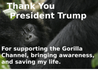 Life, Thank You, and Trump: Thank You  resident Trump  For supporting the Gorilla  Channel, bringing awareness,  and saving my life.