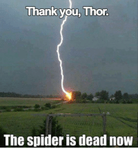 Thor: Thank you, Thor.  The Spider IS deadnoW