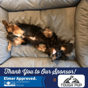 Dogs, Memes, and Thank You: Thank you to Our Sponsor!  M.  Elmer Approved.  >>  DOGS 2019 MPOTY  Winner  TOUGH PUP  ON DEPLOYMENT Looks like our 2019 Military Pet of the Year and DoD Mascot, Elmer Fudd, is LOVING his new orthopedic bed, donated by Tough Pup!   Tough Pup specializes in hand crafted products for your pet, made right here in the USA! As a sponsor of our Military Pet of the Year contest and continual supporter of Dogs on Deployment, they have our greatest thanks for all they've done to support military pets!   Check them out at www.toughpup.com for your dog's next best bed! #toughpu