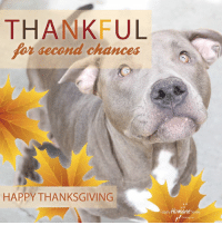 From all of us at Calgary Humane Society (especially Eleanor), Happy Thanksgiving!: THANKFUL  for second chances  HAPPY THANKSGIVING  Colgary HUmane From all of us at Calgary Humane Society (especially Eleanor), Happy Thanksgiving!
