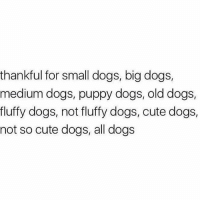 Truly blessed 🙏🏻✨: thankful for small dogs, big dogs,  medium dogs, puppy dogs, old dogs,  fluffy dogs, not fluffy dogs, cute dogs,  not so cute dogs, all dogs Truly blessed 🙏🏻✨