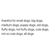 all dogs 🙃: thankful for small dogs, big dogs,  medium dogs, puppy dogs, old dogs,  fluffy dogs, not fluffy dogs, cute dogs,  not so cute dogs, all dogs all dogs 🙃
