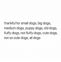 shoutout to the not so cute dogs ❤️❤️❤️ (@hercampus): thankful for small dogs, big dogs,  medium dogs, puppy dogs, old dogs,  fluffy dogs, not fluffy dogs, cute dogs,  not so cute dogs, all dogs shoutout to the not so cute dogs ❤️❤️❤️ (@hercampus)