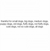 HappyThanksgiving: thankful for small dogs, big dogs, medium dogs,  puppy dogs, old dogs, fluffy dogs, not fluffy dogs,  cute dogs, not so cute dogs, all dogs HappyThanksgiving