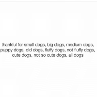 Love all dogs!!! 💕💯😍🙌🏼: thankful for small dogs, big dogs, medium dogs,  puppy dogs, old dogs, fluffy dogs, not fluffy dogs,  cute dogs, not so cute dogs, all dogs Love all dogs!!! 💕💯😍🙌🏼