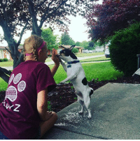 Thanks @emmabffjackson0427 for the support in our maroon tribal tee order now at PawzShop.com: Thanks @emmabffjackson0427 for the support in our maroon tribal tee order now at PawzShop.com
