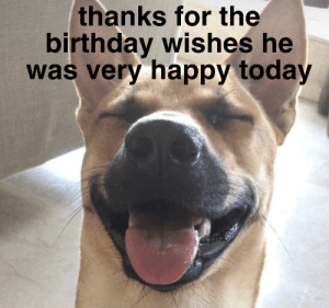 Birthday, Happy, and Today: thanks for the  birthday wishes he  was very happy today me_irl