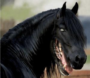 Thanks, I hate horses with dog faces: Thanks, I hate horses with dog faces