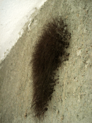 Spiders, Daddy Long Legs, and Cave: Thanks, I hate it - a daddy long legs cave (the freaky half spiders with long legs)