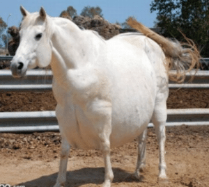 Thanks, I hate this chonker horse.: Thanks, I hate this chonker horse.