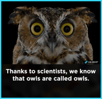 Memes and 🤖: Thanks to scientists, we know  that owls are called owls.
