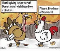 JewishMemes JewishHumor Shabbat have a happy Thanksgiving Turkey everyone!!!!: Thanksgiving is the worst!  Sometimes I wish I was born  Please. Ever hear  a chicken...  of Shabbat? JewishMemes JewishHumor Shabbat have a happy Thanksgiving Turkey everyone!!!!