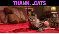 Cats, Memes, and 🤖: THANKUCATS thank u, cats