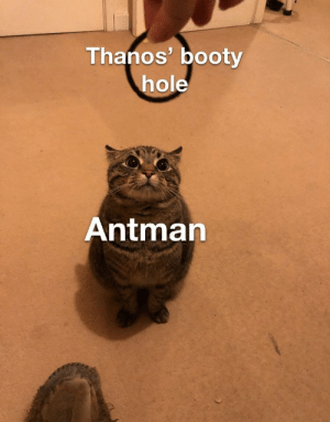 Booty, Dank Memes, and Booty Hole: Thanos' booty  hole  Antmarn Fashionably late
