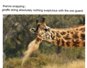 nothing to see here: thanos snapping:  giraffe doing absolutely nothing suspicious with the zoo guard: nothing to see here