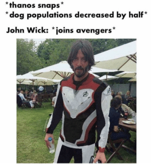 John Wick, Memes, and Avengers: *thanos snaps*  *dog populations decreased by half*  John Wick: *joins avengers* 3 weeks for parabellum my dudes via /r/memes http://bit.ly/2GG2QW9