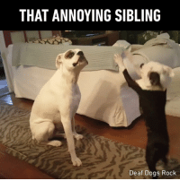 9gag, Dogs, and Memes: THAT ANNOYING SIBLING  Deaf Dogs Rock sorry I annoyed you with my friendship - 📸@deafdogsrock - boxer deafdog sibling 9gag