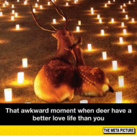 """Club, Deer, and Life: That awkward moment when deer have a  better love life than you  THE META PICTURE <p><a href=""""http://laughoutloud-club.tumblr.com/post/154681962134/ill-just-go-cry-in-a-corner"""" class=""""tumblr_blog"""">laughoutloud-club</a>:</p>  <blockquote><p>I'll Just Go Cry In A Corner</p></blockquote>"""