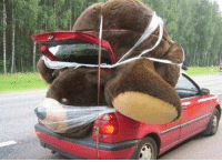 Bear, Plastic, and Nose: That bear is going to suffocate with that plastic wrap covering his nose and mouth.