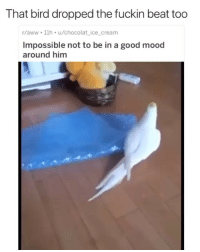 Aww, Memes, and Mood: That bird dropped the fuckin beat too  r/aww 1lh u/chocolat_ ice_cream  Impossible not to be in a good mood  around him The bird is about to drop an ep