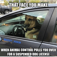 Dogs, Funny, and Lol: THAT FACE YOU MAKE  DEPUTY HOOKEM  WHEN ANIMAL CONTROL, PULLS YOU OVER  FOR A  DOG LICENSE 😂😂🐶 Repost from @Deputy_Hookem CopHumor CopHumorLife Humor Funny Comedy Lol Police PoliceOfficer ThinBlueLine Cop Cops LawEnforcement LawEnforcementOfficer SheepDog BlueFamily Protect K9 K9Unit Dog Dogs DogsOfInstagram MansBestFriend License