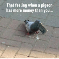 Dank, 🤖, and Pigeon: That feeling when a pigeon  has more money than you.